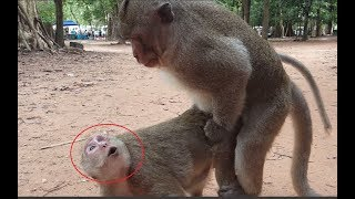 What he doing on female monkey? Sweet Pea's mother cry Oh Good! Why female monkey cry Oh Wow? thumbnail