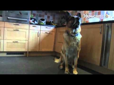 how-to-prepare-your-dog-for-guard-dog-training