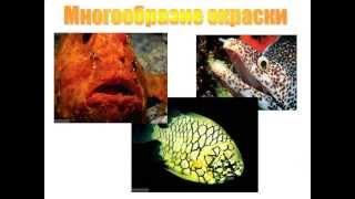 Многообразие рыб.AVI