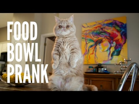 Pranked by George the Cat - Food Bowl Prank