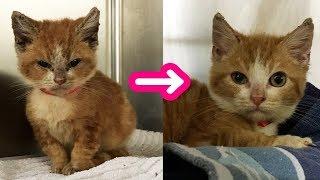 【感動実話】「ムッ!」とした顔で保護施設に連れてこられた子猫。それから1ヶ月が経つと… 幸せ顔に大変身! thumbnail