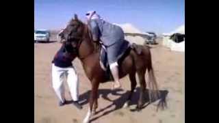خليجى سعودى أكل كبسة حتى انتفخت طيزه ولا يستطيع ركوب الخيل