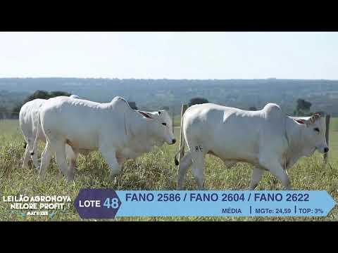 LOTE 48 FANO 2586 X 2604 X 2622