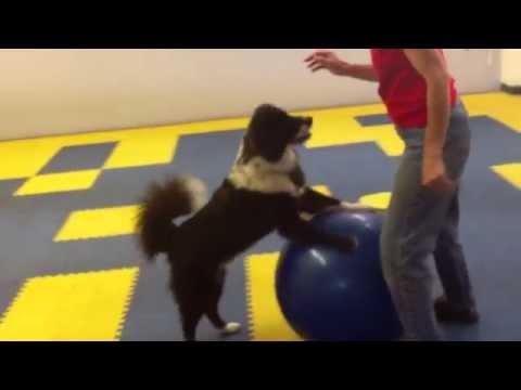 Circus Dog Panda