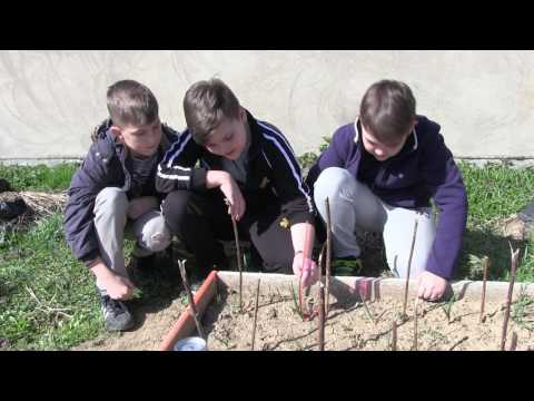 Earth Day Video for GLOBE Gunja Croatia