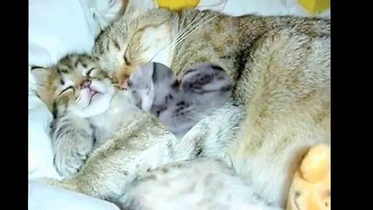 Няшные мордочки,милые котики!Фото котиков :3 - YouTube