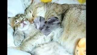 Няшные мордочки,милые котики!Фото котиков :3