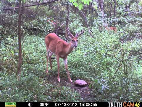 Primos Truth Cam 46 Trail Camera, Jackson Co. WV.