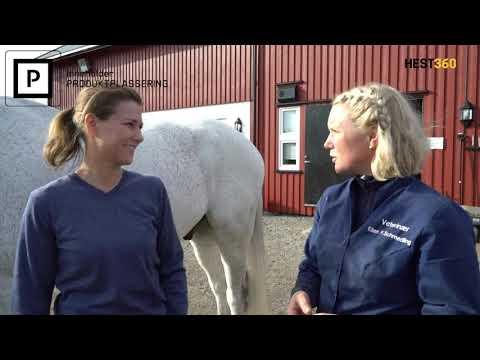 Vlog² 28 Hest360 hesten til tannlegen