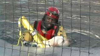 CAUGHT ON CAMERA : DOG RESCUED FROM POND