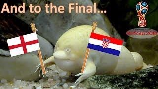 World Cup Russia 2018. The Guessing Frog. England vs Croatia | Semi finals
