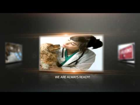 24 Hour Emergency Vet Miami(786) 472-1678|Miami Emergency Vet|24 Hour Vet in Miami