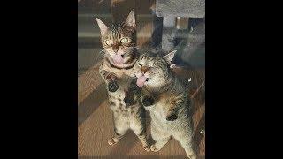 Подборка приколов с животными/ Кошки #1