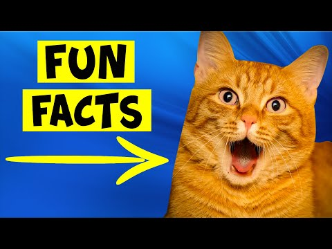 Fun Facts About Orange Cats - #3 Applies To Humans Also