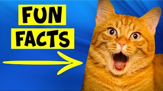 Fun Facts About Orange Cats  #3 Applies To Humans Also