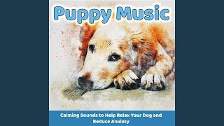 Music for Dogs (Wet Kisses)