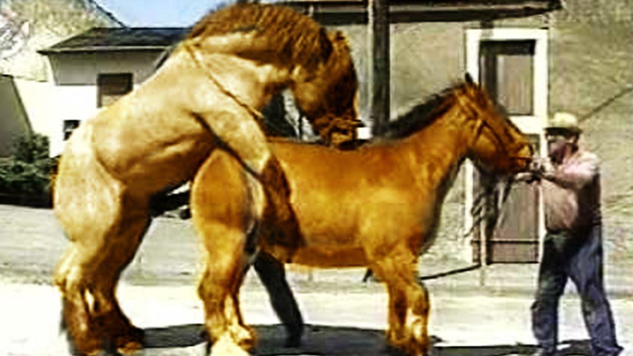 Девочка с конем занимается сексом