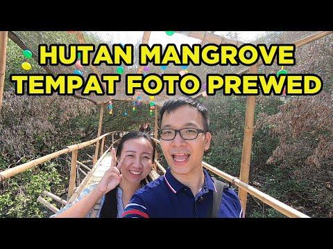wisata-hutan-mangrove-wonorejo-surabaya!-tempat-ngadem-suasana-alam