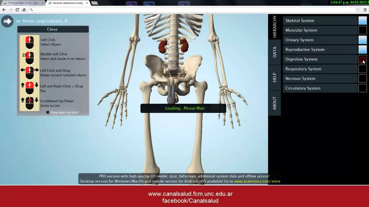 Aplicación de anatomía en 3d - YouTube
