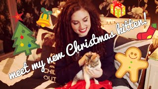 MEET MY NEW KITTEN | Christmas Cat | Lily Kitten Thumbnail