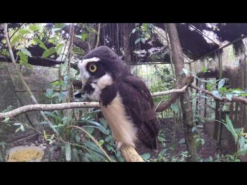 Belize Zoo March 2017