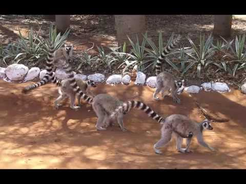 The Duke Lemur Center