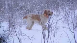 Odessa In The Snow