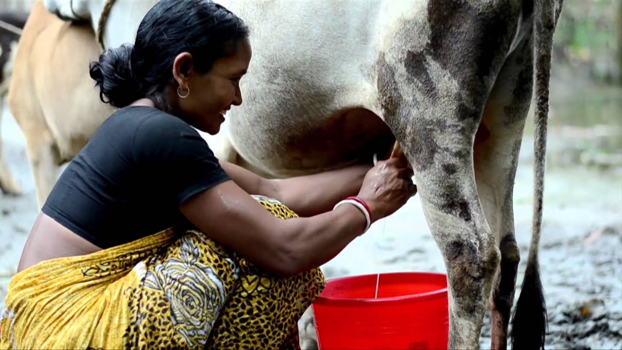 empowerment of women through dairy cooperatives Women entrepreneurship and milk cooperatives in india  is to analyze the  improvement of socio economy status, entrepreneurship and empowerment of  women farmers  dairy sector has assumed much significance by generating  income.