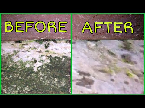 How to remove Algae।। How to clean tile।। Easy Life Hacks।। Muriatic Acid