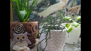 Обзор домашних растений на 31 января, поездка на дачу