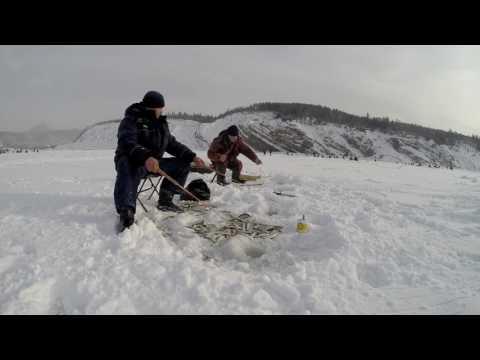 север рыбная ловля  нате корюшку