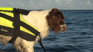 Søværnets Dykkertjenestes nye bedste ven