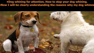 Dog Whining For Attention - How To Stop Dog Whining