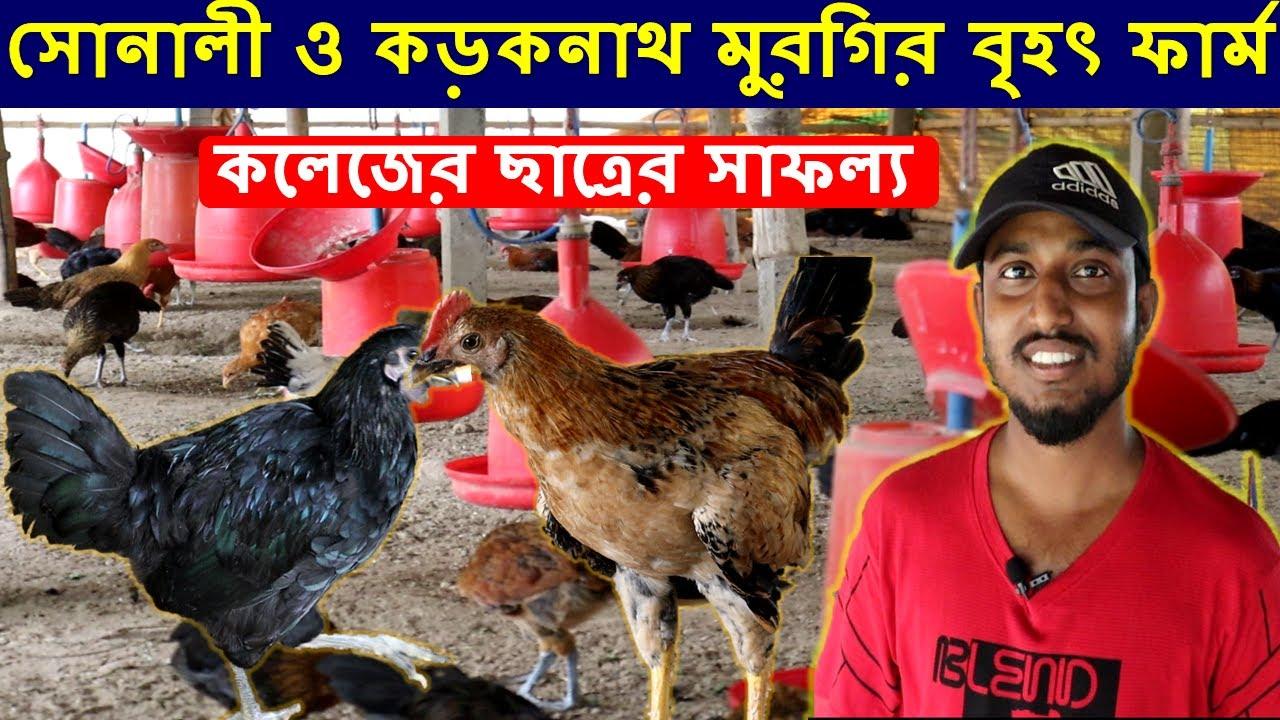 সোনালী ও কড়কনাথ মুরগির বৃহৎ ফার্ম করে  | Sonali and Kadaknat Murgi Farming West Bengal