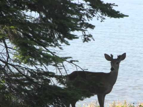 lake-superior-for-sale-492-memory-road,-pine-bay,-thunder-bay,-on