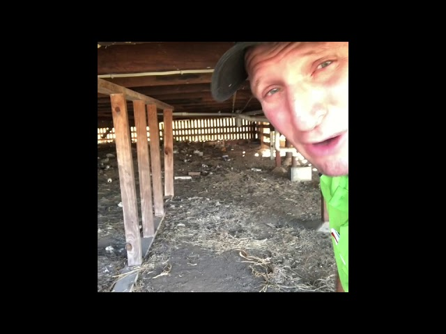 The importance of a termite inspection under a subfloor area