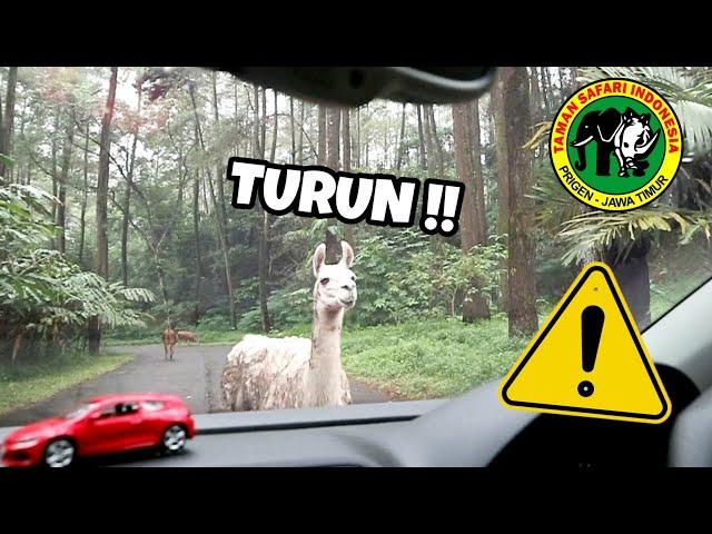 DETIK-DETIK MOBILKU DI SERANG HEWAN INI !!! - Vlog Taman Safari