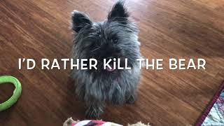 Coconut And The Bear ( Cairn Terrier )