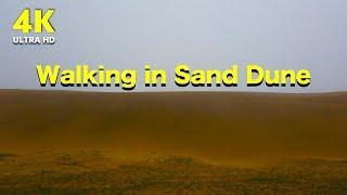 신비한 모래사막 산책   대한민국 자연 풍경 4K 고화…