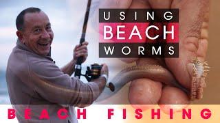 Fishing Off the Beach Using Beach Worms!