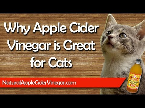 the-best-apple-cider-vinegar-natural-treatments-for-cats