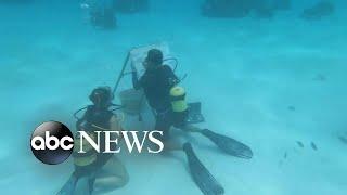 Cuban artist draws underwater in full scuba gear