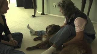 Reiki Case Study: Peaches The Dog