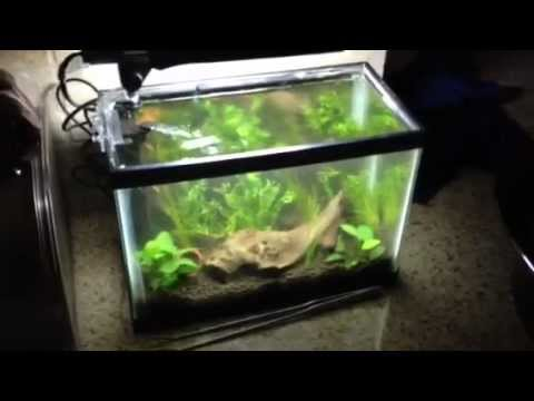 2 5 Gallon Planted Tank Youtube
