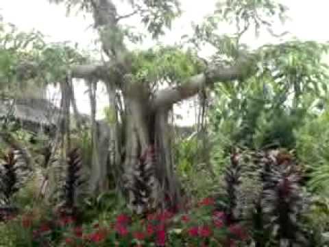 Vườn cây cảnh đẹp và rẻ cho dân buôn