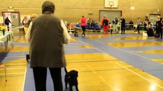 Manyork Wayfarer Yorkshire Terrier
