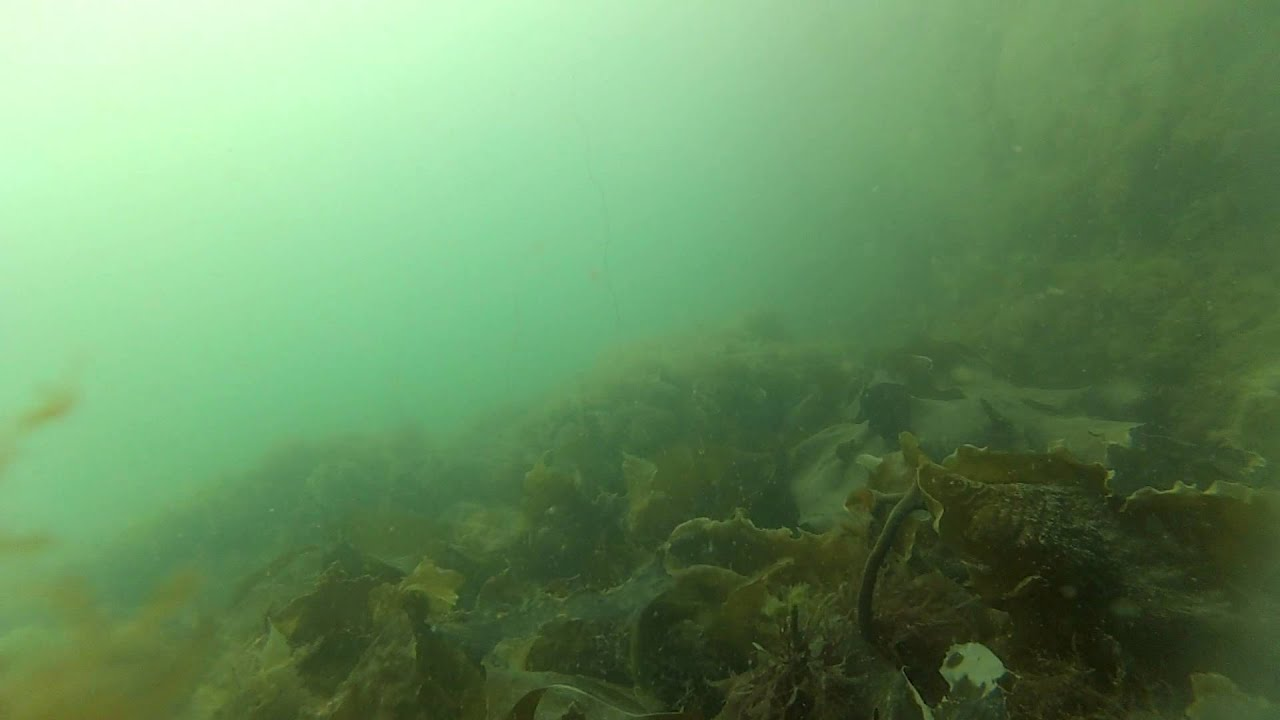 Wrasse Fishing With Underwater Camera Footage At Holyhead Breakwater Wales UK Part 2 Of 3
