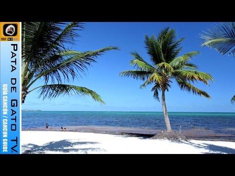 CARBON VEGETAL ACTIVADO PROPIEDADES DOCTOR ANTONIO CHÁVEZ MEDICINA NATURISTA,PUEBLA,MÉXICO de YouTube · Duración:  12 minutos 56 segundos