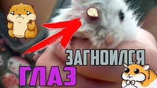 видео Джунгарский хомяк заболел