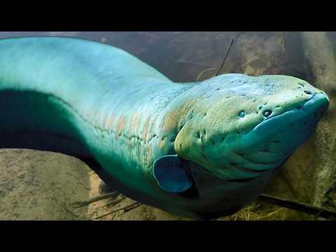 В Марианской Впадине Есть Жизнь Хоть Это Научно Невозможно Мегаладон vs НЛО Кто Живёт на Дне Океана?